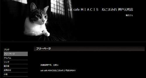 cat cafe MIACIS ねこまみれ 神戸元町店