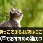 神戸でおすすめの猫カフェ